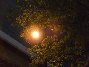 夜の街灯と街路樹